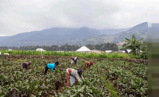 Rwanda-Farmers.jpg