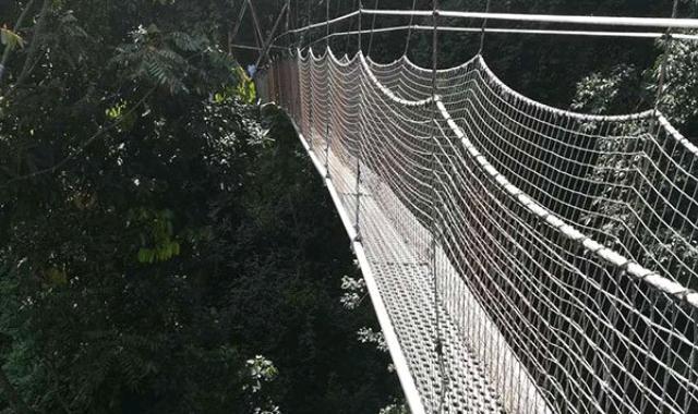 Canopy walk at Nyungwe park, Rwanda