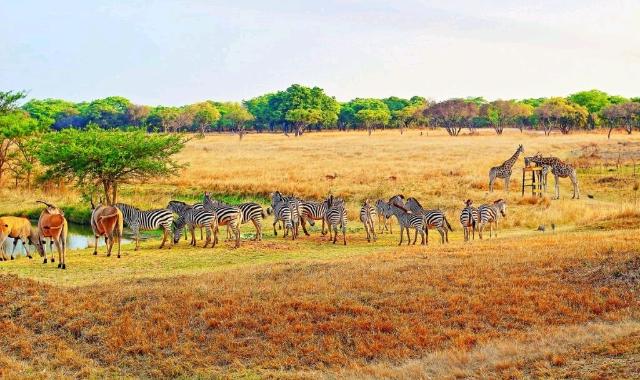 Mukuvisi Woodlands Zimbabwe