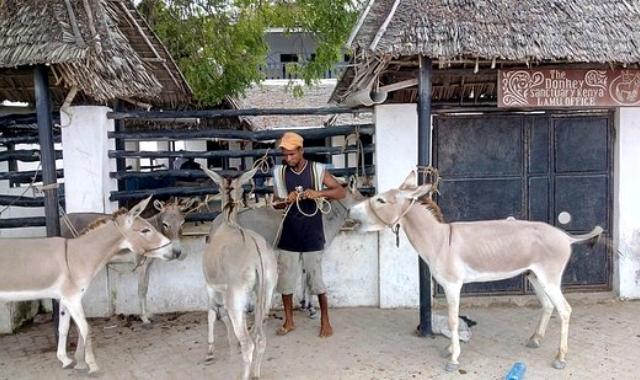 lamu-donkey-sanctuary_crop_640x380.jpg