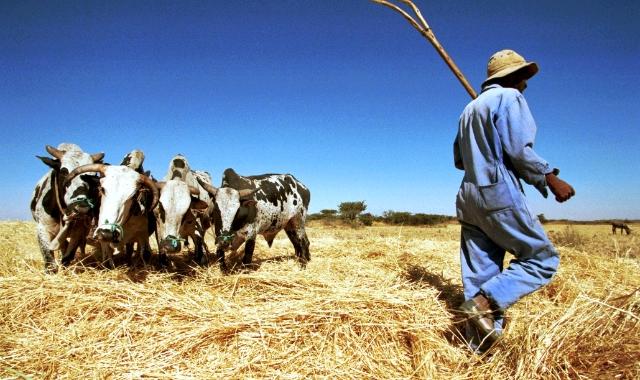 Eritrea farmers