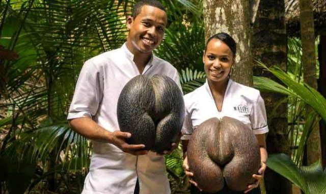 world's largest seed