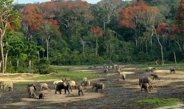 Dzanga-Sangha National Park