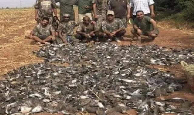 birds kill