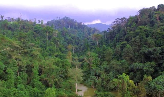 Atewa Forest in Ghana