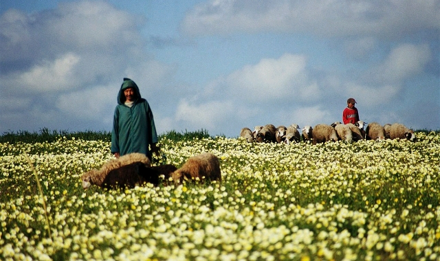 Shepherd in rural Morocco.