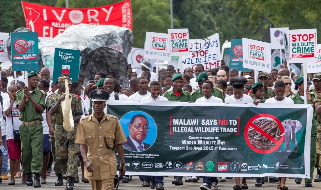 Protest Of Ivory