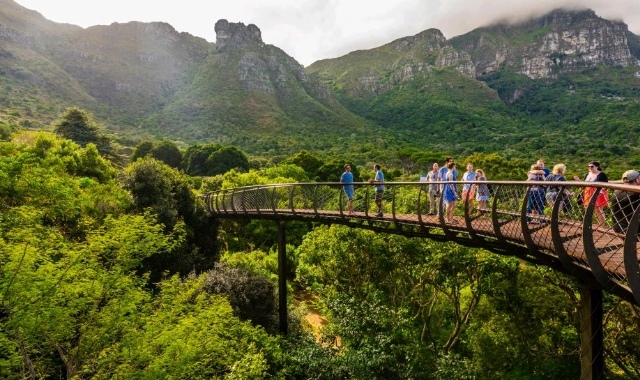 The lush Kirstenbosch Botanical Garden