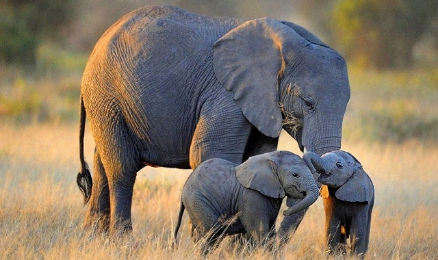 Zimbabwe-elephants_crop_640x380.jpg